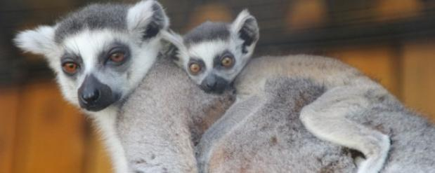 Нижегородцев по имени Вера и Андрей бесплатно зовут в зоопарк «Лимпопо»