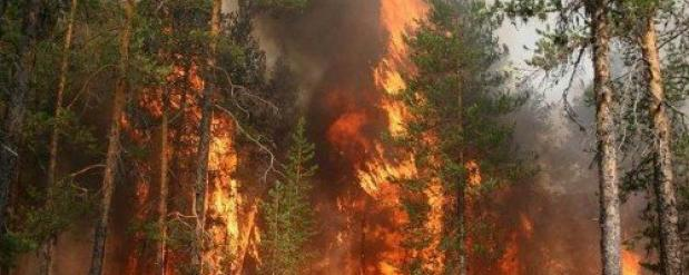 В Нижегородской области увеличивается пожароопасность