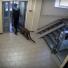 В Нижнем Новгороде в квартире многоэтажки живет леопард